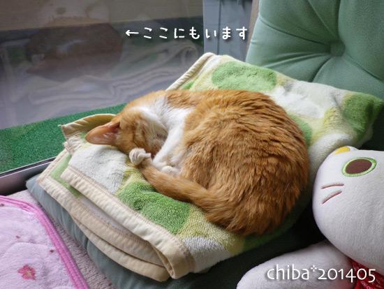 chiba14-05-181.jpg