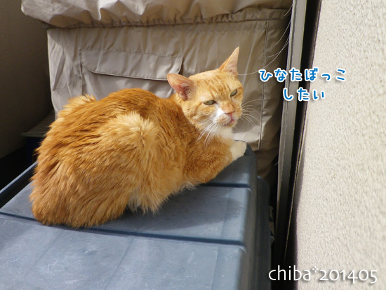 chiba14-05-193.jpg