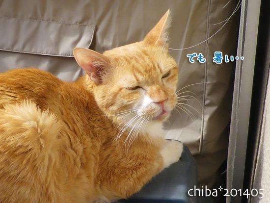 chiba14-05-194.jpg