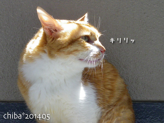 chiba14-05-28.jpg