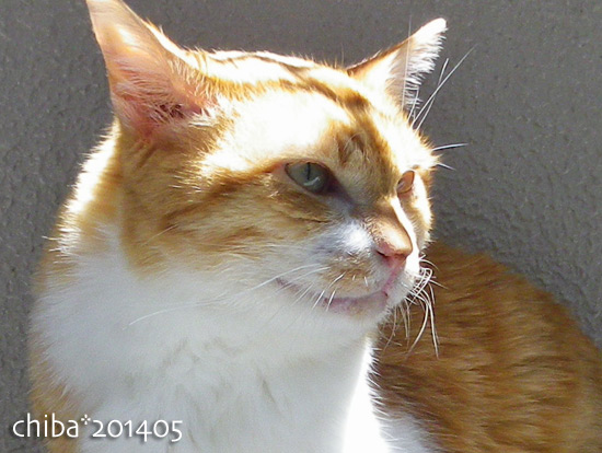 chiba14-05-29.jpg