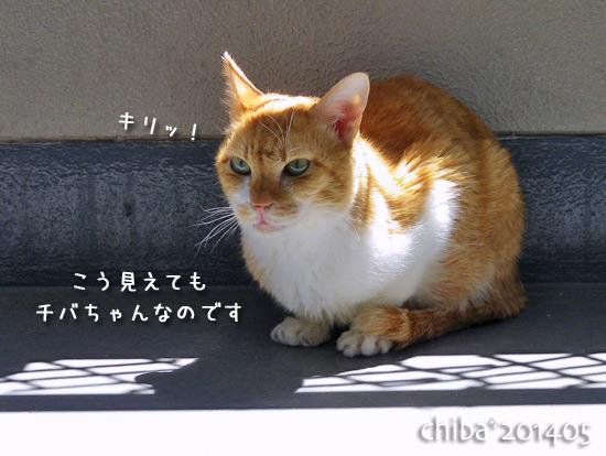 chiba14-05-30.jpg