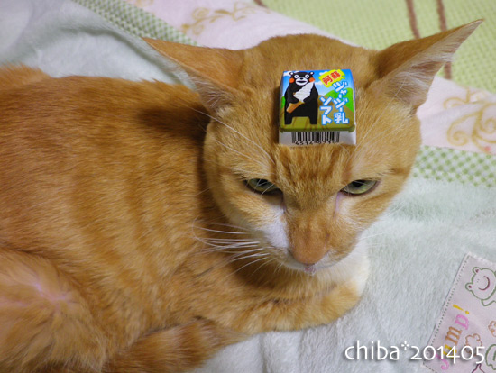 chiba14-05-41.jpg