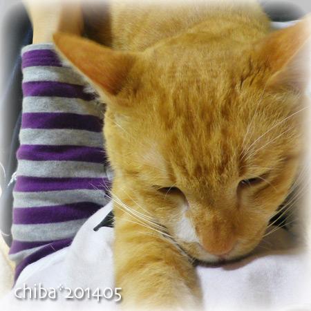 chiba14-05-49.jpg