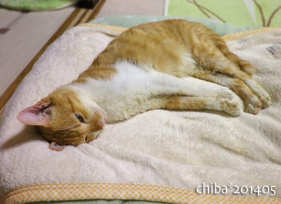 chiba14-05-67.jpg