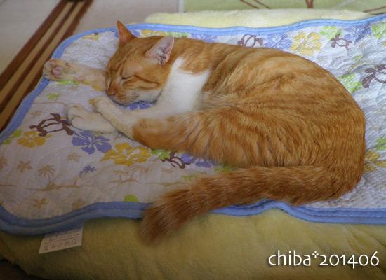 chiba14-06-01.jpg