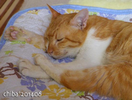chiba14-06-02.jpg