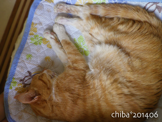 chiba14-06-10.jpg
