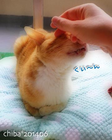 chiba14-06-100.jpg