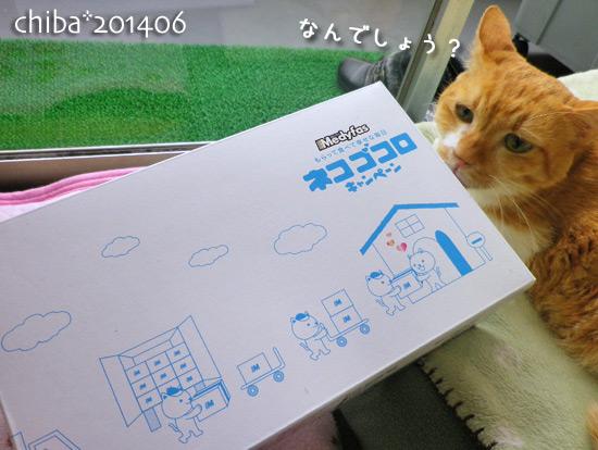 chiba14-06-118.jpg