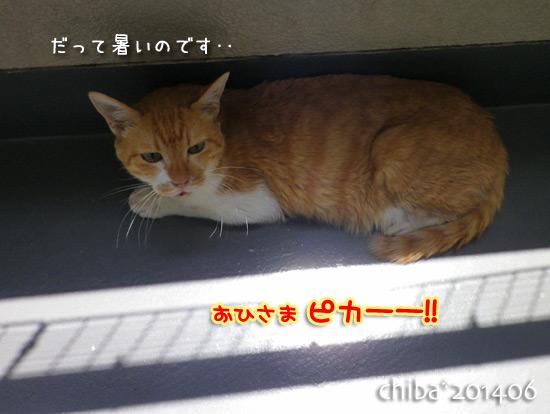 chiba14-06-185.jpg