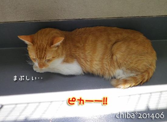 chiba14-06-186.jpg