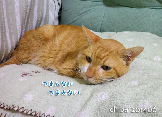 chiba14-06-193.jpg