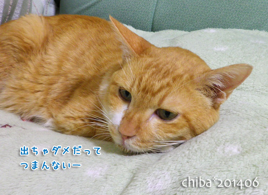 chiba14-06-195.jpg