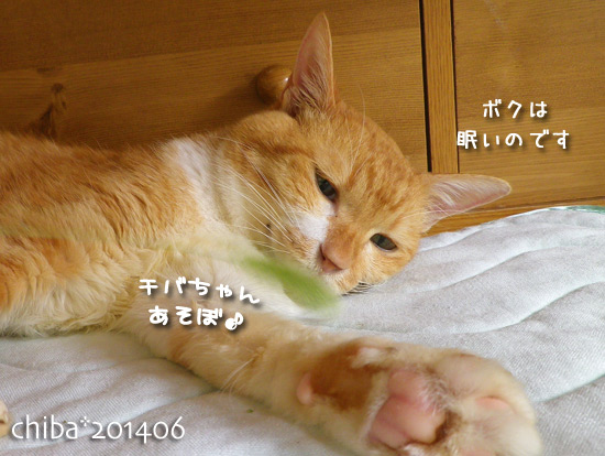 chiba14-06-222.jpg
