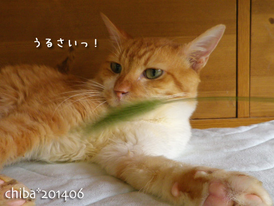 chiba14-06-224.jpg
