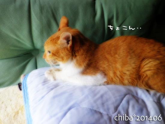 chiba14-06-225.jpg