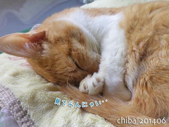 chiba14-06-227.jpg