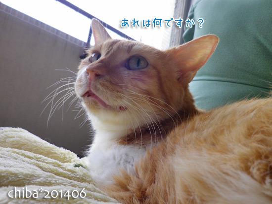 chiba14-06-228.jpg