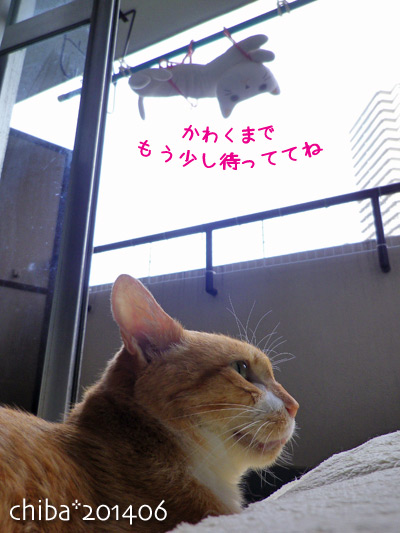 chiba14-06-231.jpg
