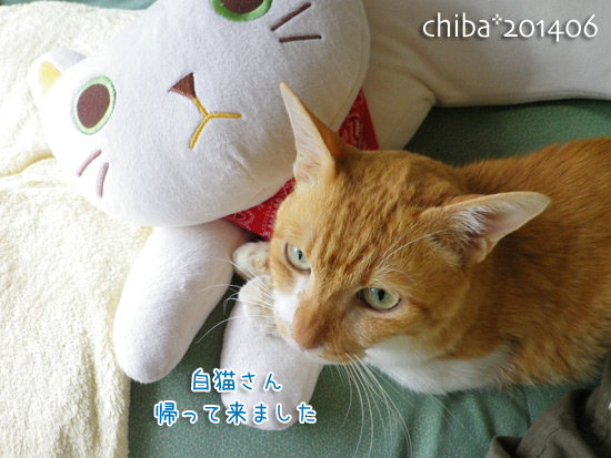 chiba14-06-235.jpg
