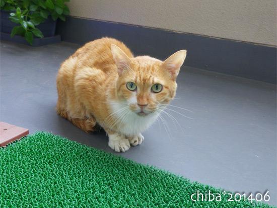 chiba14-06-39.jpg