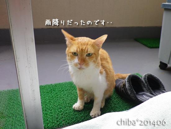 chiba14-06-42.jpg