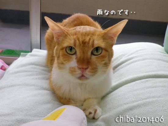 chiba14-06-51.jpg