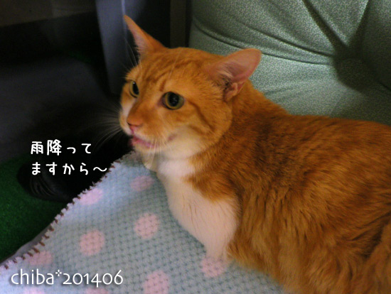 chiba14-06-68.jpg