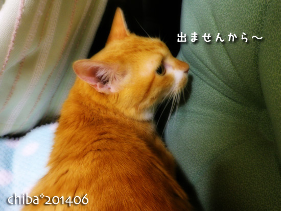chiba14-06-69.jpg