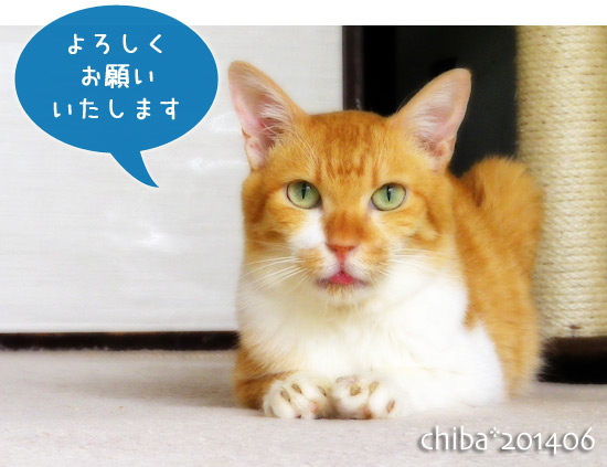 chiba14-06-70.jpg