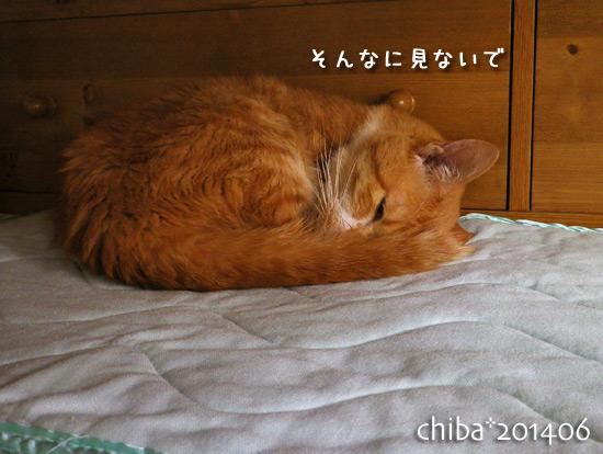 chiba14-06-74.jpg