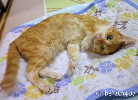 chiba14-07-08.jpg