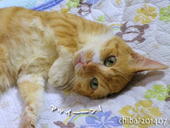 chiba14-07-09.jpg