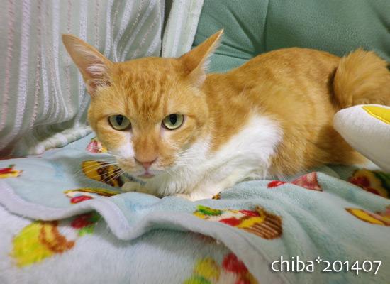 chiba14-07-111.jpg