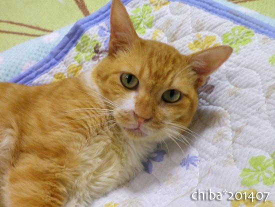 chiba14-07-14.jpg