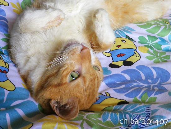 chiba14-07-151.jpg