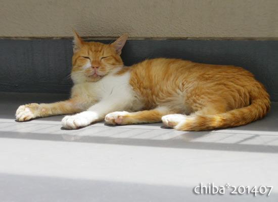 chiba14-07-58.jpg