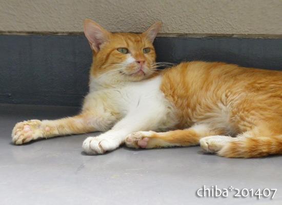 chiba14-07-59.jpg