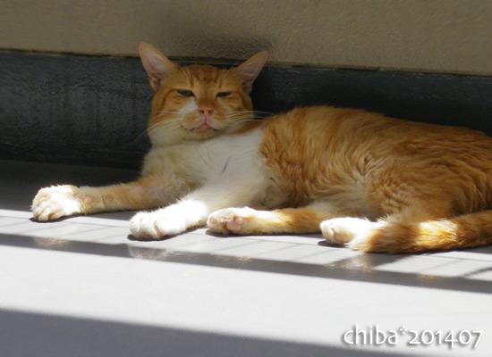 chiba14-07-61.jpg
