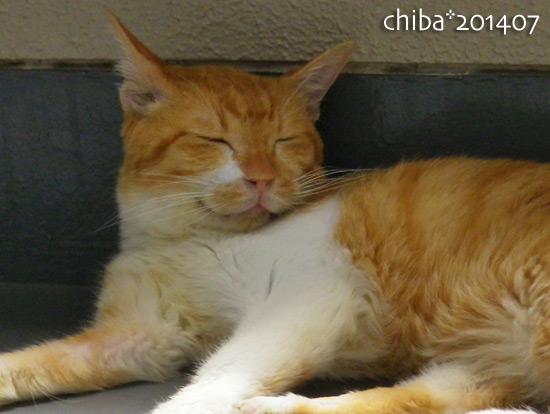 chiba14-07-62.jpg