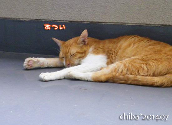 chiba14-07-79.jpg