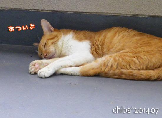 chiba14-07-80.jpg