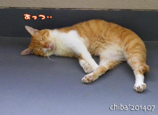 chiba14-07-81.jpg