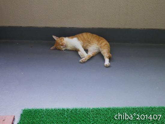 chiba14-07-86.jpg