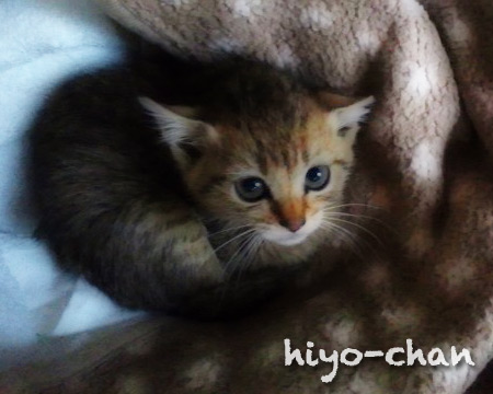 hiyo-chan01.jpg