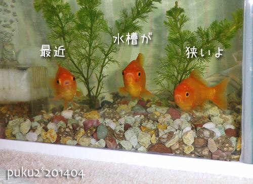 kin2014-4-6.jpg