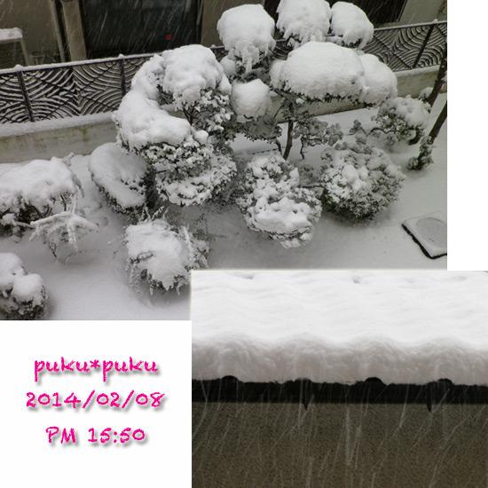 snow0208-4.jpg