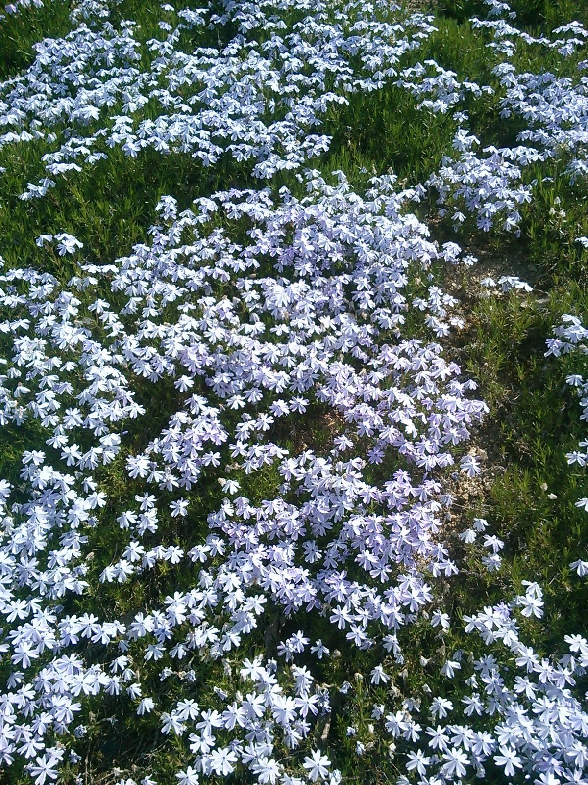 芝さくら_UP