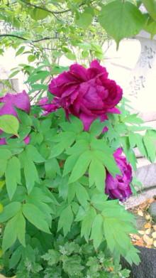 .。☆・。. Moon Rose .。o.:・